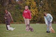 Škola psů